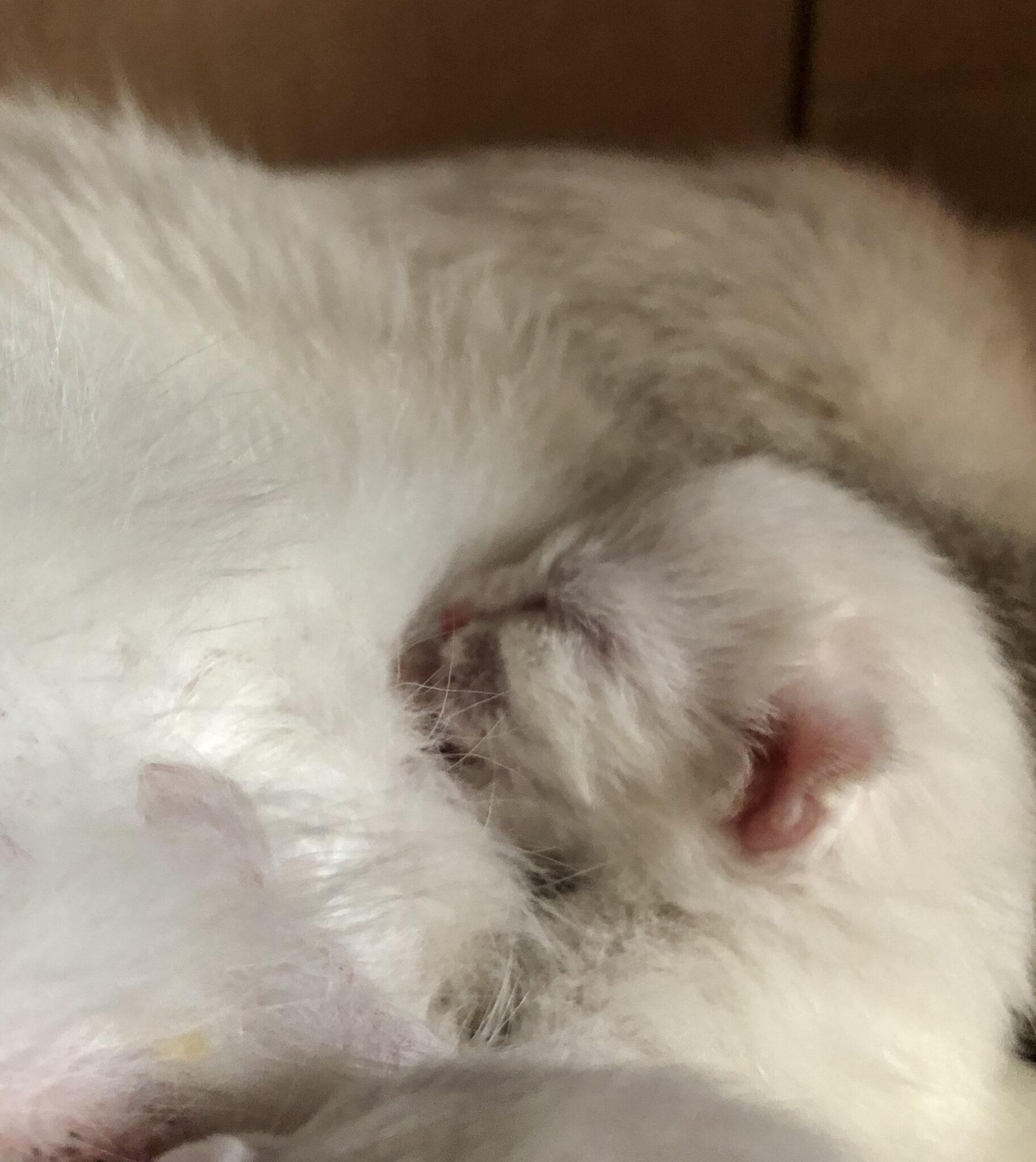 fullsizeoutput 7dd - Kittens