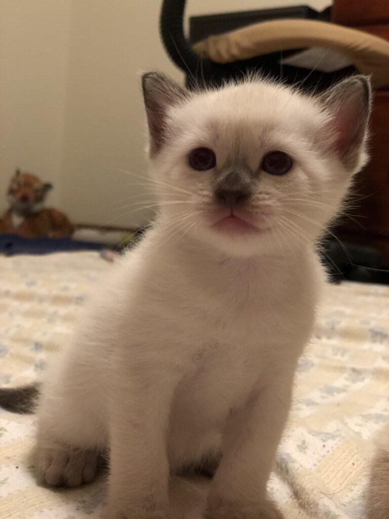 IMG 2875 768x1024 - Kittens