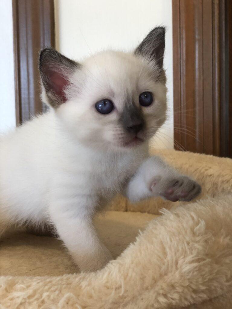 IMG 2900 768x1024 - Kittens