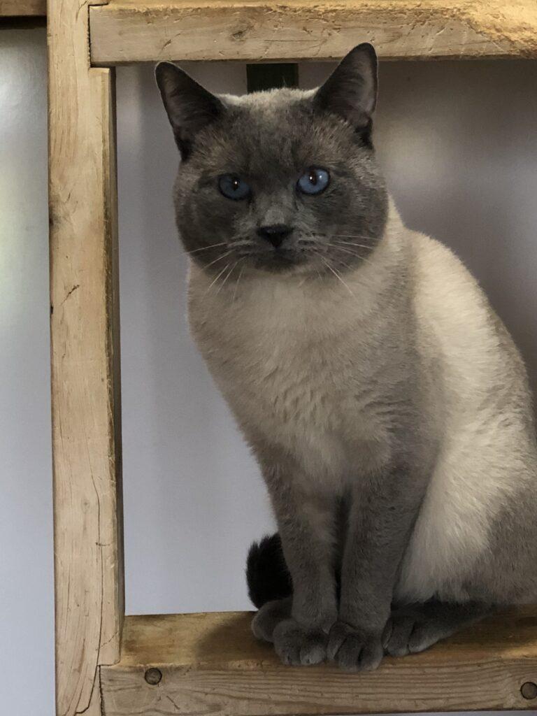 IMG 3225 768x1024 - Apple Cat Acres Males