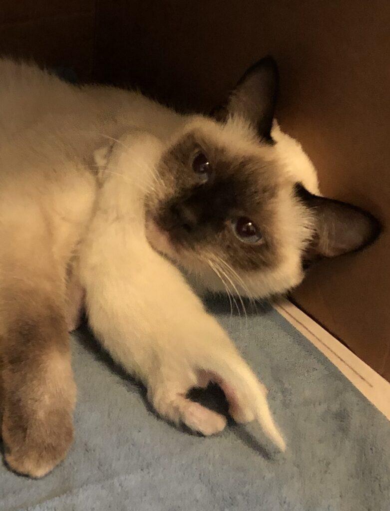 IMG 3356 781x1024 - Kittens
