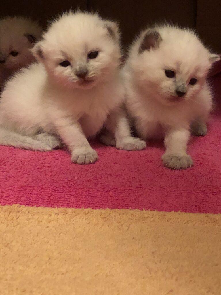 IMG 3483 768x1024 - Kittens