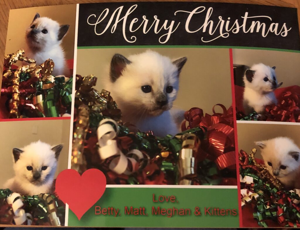 IMG 3751 1024x785 - Kittens