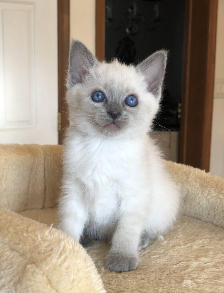 IMG 3830 783x1024 - Kittens