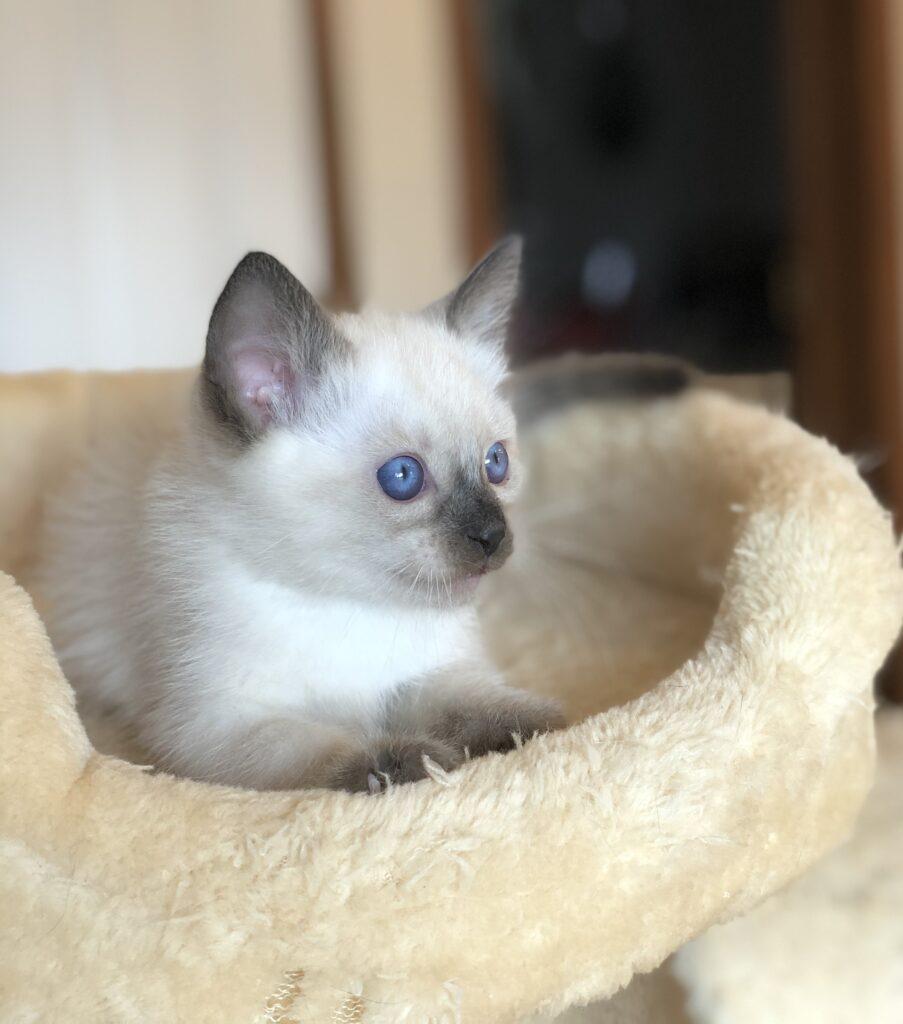 IMG 3872 903x1024 - Kittens