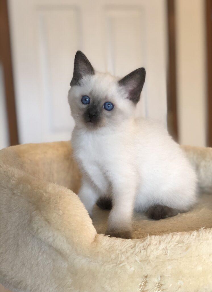 IMG 3908 746x1024 - Kittens
