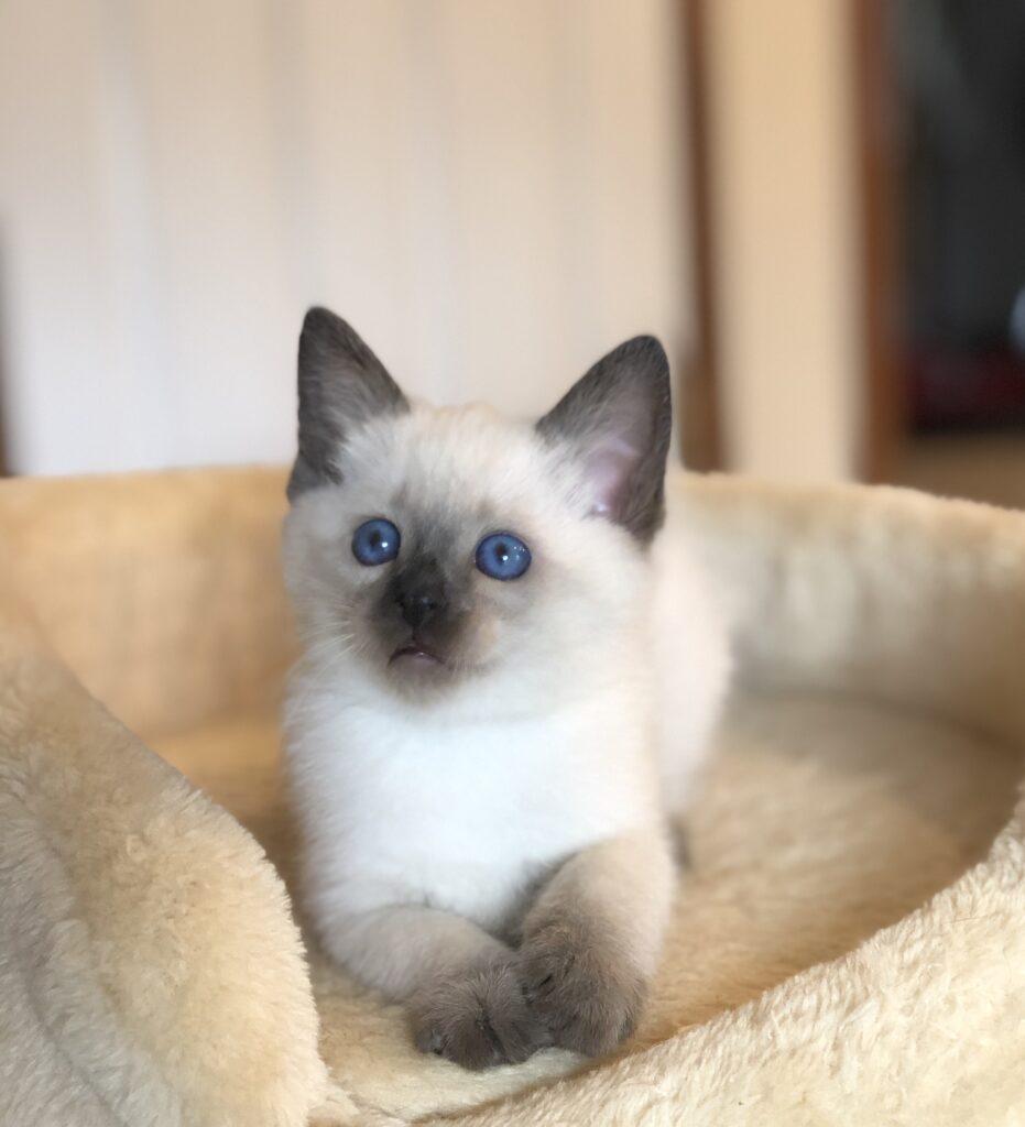 IMG 3917 931x1024 - Kittens
